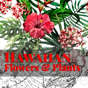 Hawaiian Flowers Coloring Book